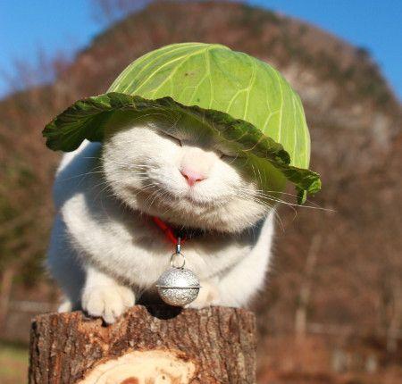 shiro wearing lettuce hat