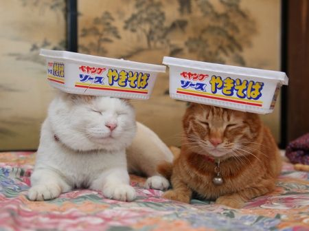 shiro and tora wearing noodle boxes