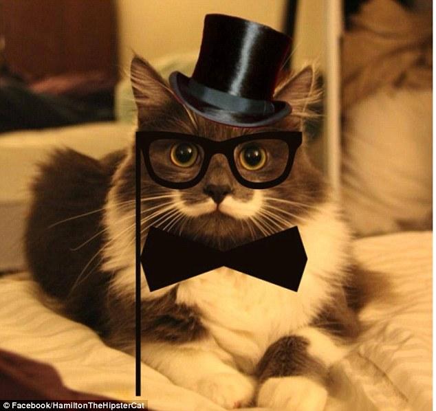 Hamilton the Hipster Cat.jpg
