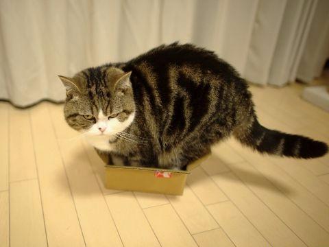 maru in box 3