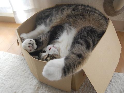 maru in box.jpg