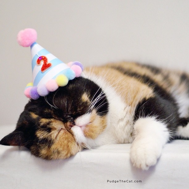 pudge birthday.jpg