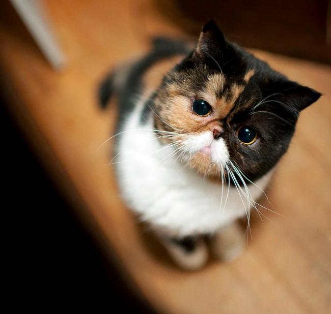 pudge cat.jpg
