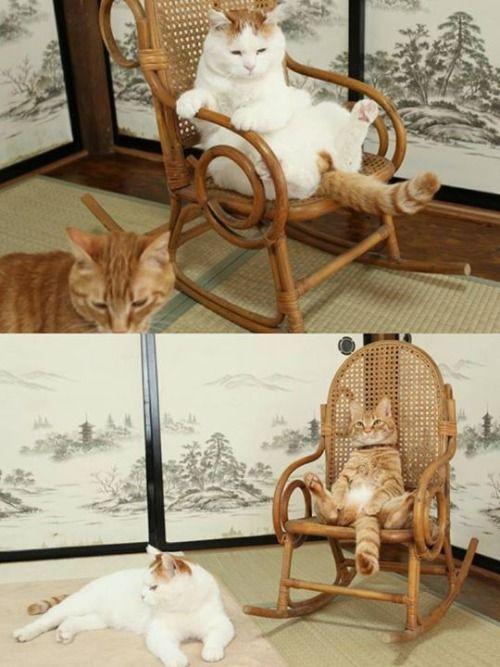 shiro and tora on chair.jpg
