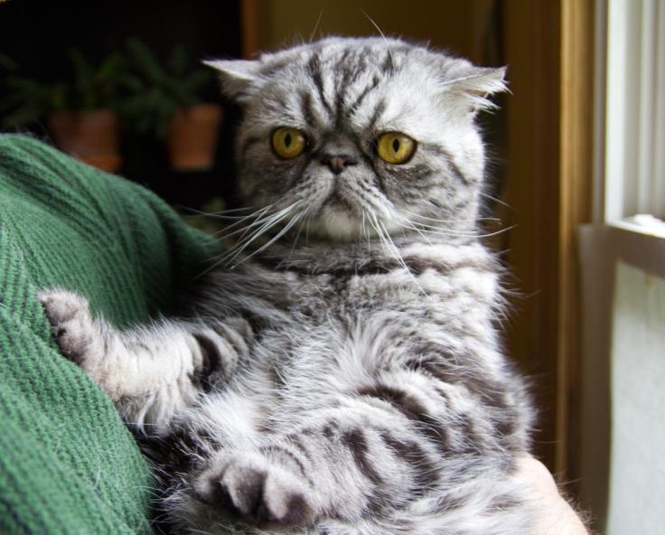 smoosh the cat.jpg