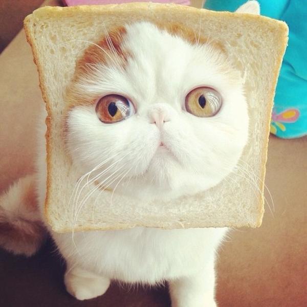 snoopy cat.jpg