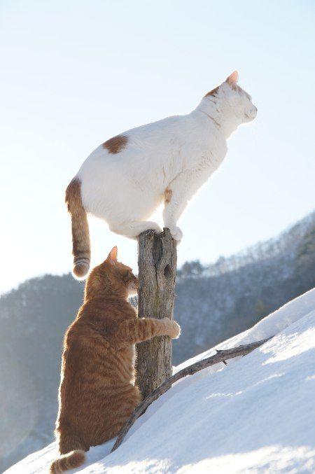 tora and shiro on snow.jpg