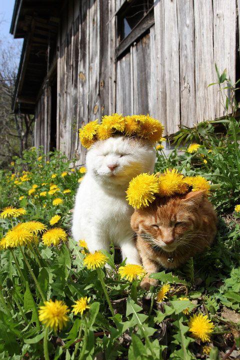 tora and shiro with flowers.jpg