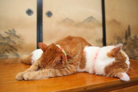 tora sleeping on shiro.jpg